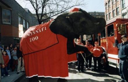 Elephant2004